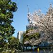 3/31(土)スカイツリーと桜
