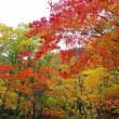層雲峡の紅葉🍁