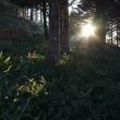 鉢伏山へ その2