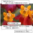追い羽根みたいなトウワタ(唐綿)の花