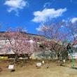 RKH 2018-03 最明寺史跡公園6