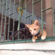 コピー屋さん家の猫たち