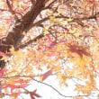 11月19日(日)はワカバザール出展です