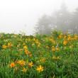 長野 白樺高原・車山高原ハイキング(7月25日)