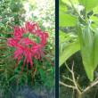 靭公園の植物