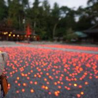滋賀の「多賀大社」の境内ナイトツアー。神職さんの案内で巡る境内。