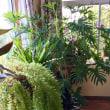 フルールの植物