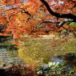 日比谷公園の紅葉・・5
