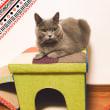 猫と一緒の椅子。