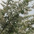 白い花誰か見ている走り梅雨