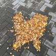 カーブしたミラーに映る空(3月『海辺の彫刻展』にて) 〜by空倶楽部