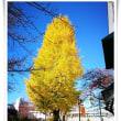 色の魔術師 伊藤八重子先生の創作ニット展 と 燃え立つ銀杏の黄