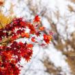 ゆく季節を惜しんで。