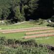 小彦名神社再訪