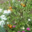 花壇のトリオ