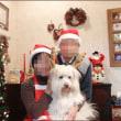 クリスマス特集<うさくま家のクリスマス(2)記念撮影とリース>