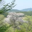 春の秩父長瀞から・・・埼玉県民の森へ・・・ヒトリシズカが静かにヒッソリと