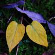 色づく草の葉