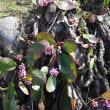 魚津西部の高台上をフキノトウや花を探して(3)・・・魚津市
