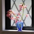 弥生の窓、蘭の春