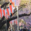 寒桜と蟹サラダ