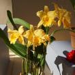 咲くやこの花館 春の洋ラン展(2018年3月)レポート