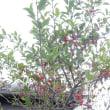 庭の植物20181015