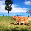 草刈り作業結果報告&放置糞のお掃除会のお知らせ