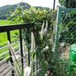小さな庭の終活