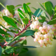 イチゴノ木に咲く花
