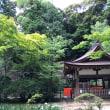 上賀茂神社の茅の輪