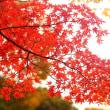 紅葉 (花 4680)