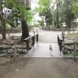 埼玉越谷*キャンべルタウン野鳥の森