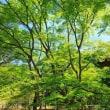 (4K)2013年・新緑の京都壁紙その9(計10枚)