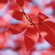 デジブック「秋の彩りに誘われて」