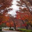 嶺公園の紅葉