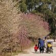 縮景園から広島城へ 180312
