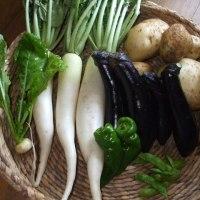 収穫野菜メニュー
