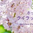 【ライブ情報更新!】来週は5月26日(土)えりも町 チャリティーライブ 5月27日(日)札幌市ライラックまつり!