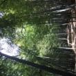 エジソンの竹