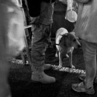 善男善女と犬