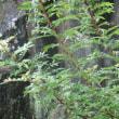 雨の一日、植物二つ。