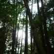 木々の隙間
