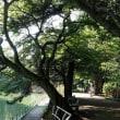 武蔵関公園です (5)