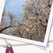4月。赤坂での美バレエ・エクササイズ。スケジュールのお知らせです。桜が美しいですね。*美バレエ・エクササイズ