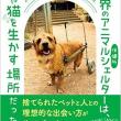 日本では1時間に9匹のペースで犬猫の命が奪われている・・・
