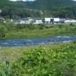 8/19-20 狩野川と相模川に行って見ましたが?釣れ無いし濁り増水でしたがねー!