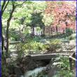 横浜公園日本庭園
