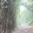 秋だから、久しぶりに広町の森(鎌倉市)へ行こう