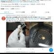12月18日(火)のつぶやき 1.1万フォロワー 法人垢 企業垢 株式会社AD-CREATE